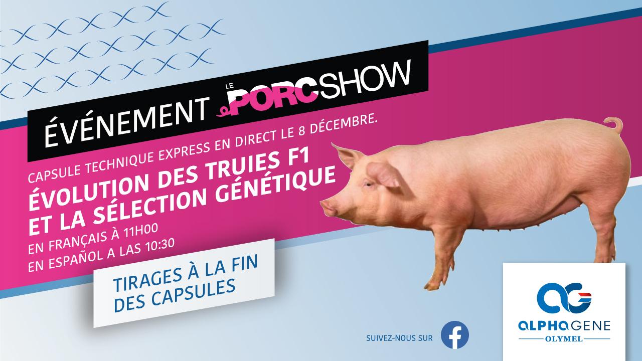 porc show